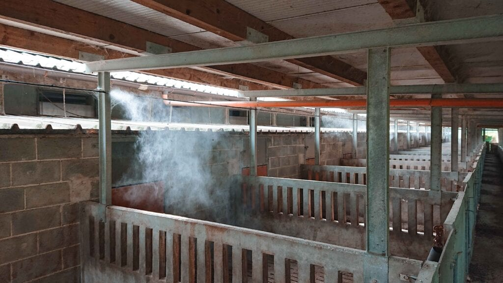 Franco Nebbia cooling cattle