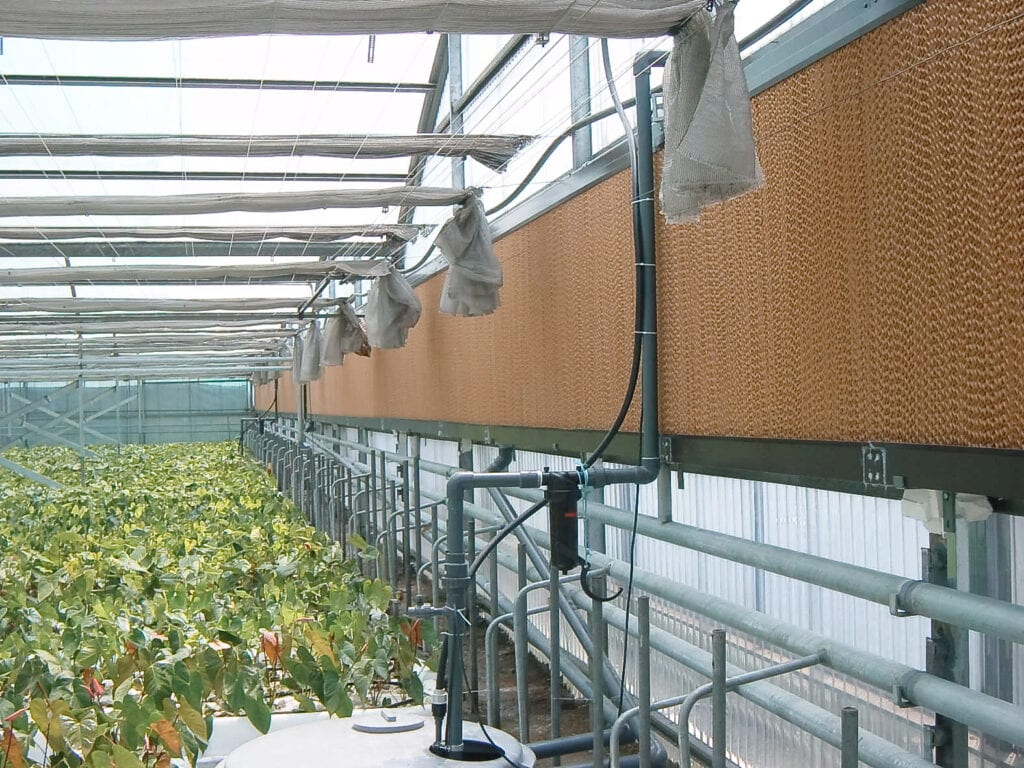 Franco Pad cooler evaporative cooling greenhouses industry