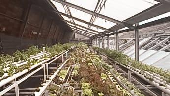 Franco serra idroponica